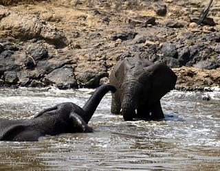 elephants jouant dans la talek