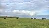Talbenny Landscape