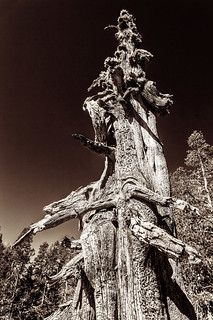 Tree Trunk  _1783