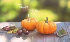 Welcome Autumn! (Through Serena's Lens) Tags: welcomeautumn fall autumn september season pumpkin acorn leaves dof bokeh outdoor stilllife canoneos6dmarkii 7dwf closeup