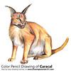 a Caracal with Color Pencils [Time Lapse] (drawingtutorials101.com) Tags: caracal caracals wild animal animals cat cats sketching sketch sketches draw drawing drawings color colors coloring pencil how timelapse video