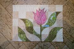"Frisky Flowers Ann Johansson <a style=""margin-left:10px; font-size:0.8em;"" href=""http://www.flickr.com/photos/126832640@N03/37078639343/"" target=""_blank"">@flickr</a>"