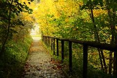 Komm mit ! (♥ ♥ ♥ flickrsprotte♥ ♥ ♥) Tags: treppe bäume herbst goldeneroktober flickrsprotte montag canon650d