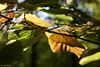 Herbstblätter (leaving-the-moon) Tags: 2017 201710 autumn blättter foliage goodlight herbst kraichgau natur nature season