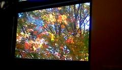 Autumn Leaves through library window - HWW (Maenette1) Tags: autumn leaves spiespubliclibrary window colors trees sunshine menominee uppermichigan happywindowswednesday flicker365 michiganfavorites 52weeksofphotographyweek45