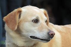 LENA (K.Verhulst) Tags: lena hond dog huisdier pet amersfoort sunrays5 coth5