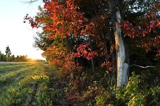 October evening light