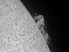Prominence in H-alpha Quark-Lunt DS D153_F8 4xVT PM_2017-10-07_PDT_09h41m14s-0326_L_g3_ap255 ip90 (Photon_chaser) Tags: sun prominences protuberance protuberances prominence alpha achromat asi andover astrophotos anover25mmblackingfiltermountedinthenosepieceoftelevue4xpowermatetelecentric quark zwo zwoasi174mmcamera etalon 3d 3dprintedtubeassembly 3dprintedtube erf lunt ls50f baader baader110mmderf