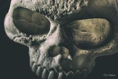 The Scull (Normann Photography) Tags: halloween macromondays elinchromedlite4400w bodyparts caput closeup hodeskalle macro scull sidelit studiolight tobeornottobe