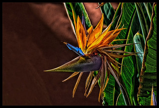 Bird of paradise and parrot flower