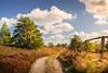 Unterwegs (O.I.S.) Tags: weg path pfad trail zaun fence landschaft landscape nature natur lüneburger heide heath heathlands niedersachsen lower saxony deutschland germany herbst autumn fall sonne sun sunlight wolken polfilter polarizer himmel clouds sky canon eos m3 15 45 1545