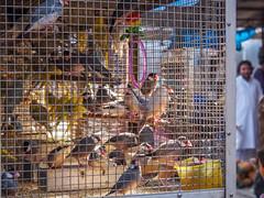 Mumbai 2015 (hunbille) Tags: india mumbai bombay birgittemumbai2lr crawford market crawfordmarket victorian historic bazaar mahatma jyotiba phule mandi mahatmajyotibaphulemandi fruit poultry cage