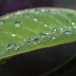 Water Drops thumbnail