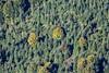 Autumnal Scene (Aerial Photography) Tags: by ndb sr 03102013 5d361466 baum bäume fotoklausleidorfwwwleidorfde geiselhöring hainsbacherforst herbst herbstbaum herbstwald landschaft laubbaum luftaufnahme luftbild mischwald nadelbaum stimmung wald aerial autumn autumntree conifer deciduoustree foliagetree forest landscape leaftree mood nature outdoor tree trees geiselhöringlkrstraubingbo bayernbavaria deutschlandgermany geiselhöringlkrstraubingbogen deu
