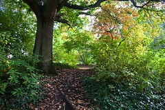 Peckham Rye Park (explored) (Adam Swaine) Tags: woodland peckehamryepark trees autumn autumncolours londonparks england english beautiful canon leaves sunlight britain seasons flora nature explored fantasticnature