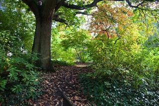Peckham Rye Park (explored)