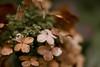 desatflowerdry (Paxton Hinson) Tags: fall desaturation flower