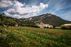 Vilanova de Meià (efe Marimon) Tags: felixmarimon catalunya lleida lanoguera montsec amapolas vilanovademeià