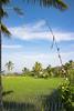 Déco de rizières (Ye-Zu) Tags: tdm bali nature tourdumonde field rice worldtour rizière munduk indonésie