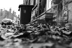 Lots of leaves. (The friendly photographer.) Tags: art arty artistic artwork britain blackwhite blackandwhite bw biancoenero beautiful candid d7100 dark england enblancoynegro ennoiretblanc flickrcom flickr google googleimages gb greatbritain greatphotographers greatphoto image inbiancoenero images interesting leeds ls27 mamfphotography mamf monochrome morley morleyleeds leaves nikon nikond7100 noiretblanc noir north northernengland negro onthestreet photography photo pretoebranco photographer photograph street lowpov town uk unitedkingdom upnorth westyorkshire yorkshire zwartenwit zwartwit zwart autumn fall