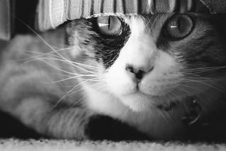 Kreacher is watching... (My Cat)