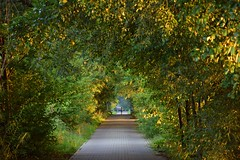 summer moods (JoannaRB2009) Tags: summer mood light golden sunset road tunnel trees plants sunlit sunlight sunny stawymilickie miliczponds dolinabaryczy dolnyśląsk polska poland nature