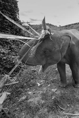 Elephant Rescue Park, Chiang Mai