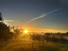 Sonnenaufgang über den Obstbäumen (Blende2,8) Tags: himmelwolken wolken wiesen sonne sonnenaufgang schwabenland obstbäume streuobstwiesen rommelsbach reutlingen badenwürttemberg himmel deutschland iphone