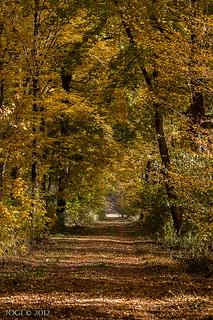 Leipzig, Schkeuditz, Waldweg im Auwald,