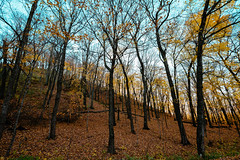 Autumn at Maplewood State Park (Tony Webster) Tags: autumncolors beachroad maplewoodstatepark minnesota october autumn fall fallcolors foliage leaves statepark trees pelicanrapids unitedstates us