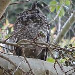 Kirstenbosch National Botanical Garden - Kaapstad thumbnail