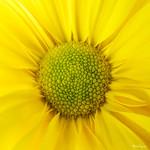 Autumn Sunshine - Soleil d'automne thumbnail