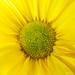 Autumn+Sunshine+-+Soleil+d%27automne