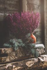 Autumn vibes (mirri_inc) Tags: flower purple green autumn pumpkin wood portrait tones moody closeup colors vibrant light october halloween