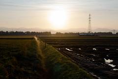Paddy field in morning after harvesting (kat-taka) Tags: ã¬ãã