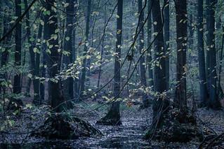 NSG Grumsiner Forst