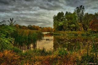 Beneath an Autumnal Overcast Sky
