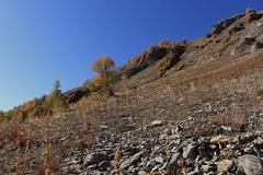 en-dessous du Chavalard (bulbocode909) Tags: valais suisse erié luidaoût montagnes nature automne arbres mélèzes bleu jaune paysages