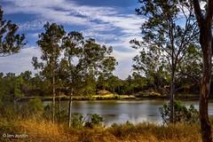 SPRING AFTERNOON (len.austin) Tags: afternoon australia australianplants brisbane brisbaneriver landscape lowtide outdoor rivergums spring westlake