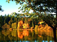 Golden Afternoon (FernShade) Tags: vancouver britishcolumbia canada westcoast pacificnorthwest stanleypark lostlagoon autumn fall fallcolors autumncolors trees scenery nature urbannature fallfoliage leaf leafcolors scenic water reflections