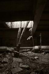 _MG_1274 (daniel.p.dezso) Tags: szeged laktanya orosz szegedi former soviet barrack elhagyatott urbex abandon ruin building tree abandoned military base militarybase