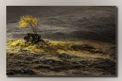 Autumn in the Glen