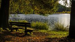 Mode d'emploi: s'asseoir et contempler (Fred&rique) Tags: lumixfz1000 photoshop raw hdr paysage nature lac jura bonlieu eau arbres banc feuille soleil couchant automne