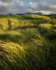 Evening Marram Grass (Tim Allott) Tags: sunset pentaxk3 longexposure flow wind sanddunes vegetation marramgrass ardroildunes uig isleoflewis outerhebrides scotland 2017