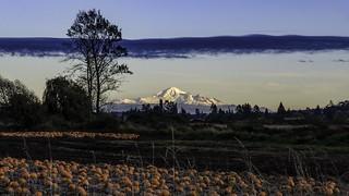 Mount Baker Pumpkin Patch