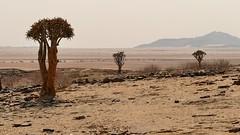 Blick in die Weite (marionkaminski) Tags: namiba africa afrika landscape paisaje paysage tree arbre arbol panasonic lumixfz1000