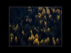 Two colors: Yellow (#201) Tags: grün herbst salzburg stjohannimpongau österreich gelb wald natur landschaft austria landscape nature wood yellow autumn gemeindegrosarl at