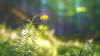 Deep in the woods (- A N D R E W -) Tags: forest woods light luz trees arbol leaves color colorful purple bluebells lily yellow amarillo púrpura green verde depthoffield dof depth bokeh grass sunray hojas canon 80d tamron 150600mm dslr petals stem