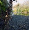 October #2 (doctorspider42) Tags: analog film medium format mf yashica mat 124g fuji pro 160h c41 epson v700 autumn czechowicedziedzice poland