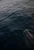 [20170827C1038-201709182244].jpg (txindoki) Tags: tarifa cádiz2017 20170930dvd01 delfín estrechodegibraltar
